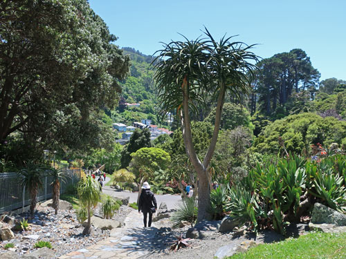 Wellington Botanic Garden, NZ